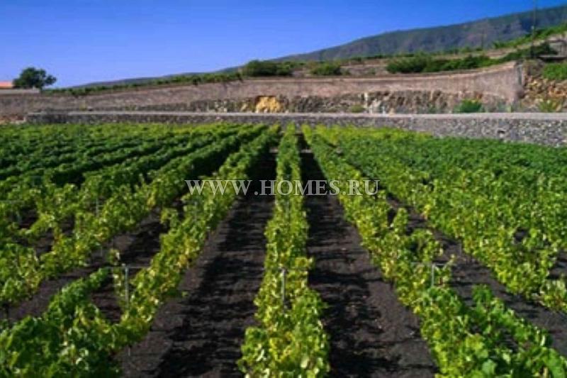 Отличная винодельня на Тенерифе