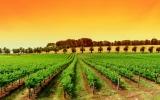 Где лучше купить виноградник в Италии?