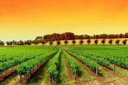 Статьи и обзоры → Где лучше купить виноградник в Италии?
