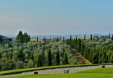 Виноградник в Кьянти, Тоскана