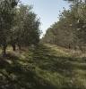 Производство оливкового масла в Италии