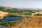Виноградник на Сицилии