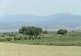 Замечательная оливковая плантация в Испании