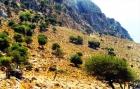 Продается Земельный участок, Греция, Северная Греция