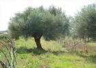 Продается Земельный участок, Греция, Пелопоннес