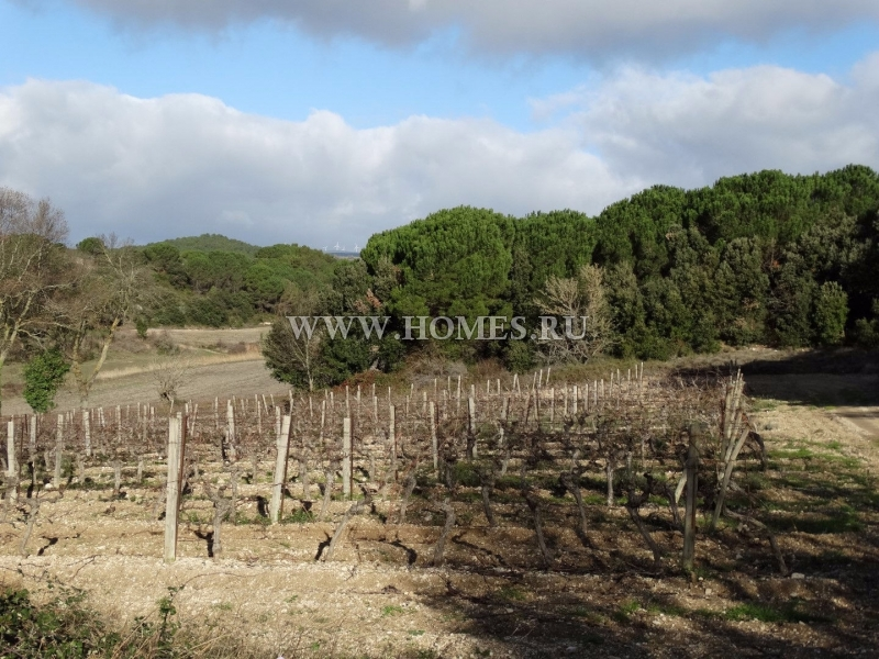 Замечательный дом с частным виноградником во Франции